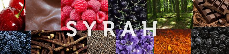syrah-vins-cépages